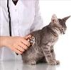 Ветеринарные клиники в Шаранге